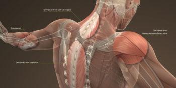 Ортопедия - травматология