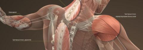 Травматология - Ортопедия